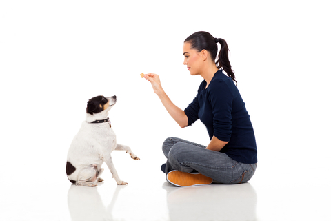DogTraining New Blog: How To Train A Dog
